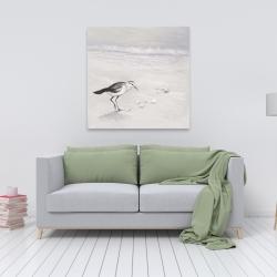 Canvas 36 x 36 - Semipalmated sandpiper