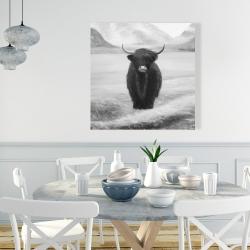 Canvas 36 x 36 - Monochrome highland cow