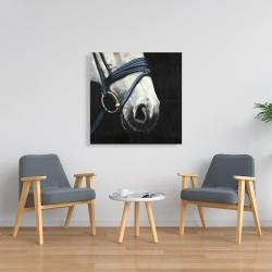 Toile 36 x 36 - Cheval avec harnais d'attelage