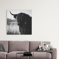 Canvas 36 x 36 - Beautiful monochrome highland cow