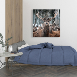 Canvas 36 x 36 - Stags