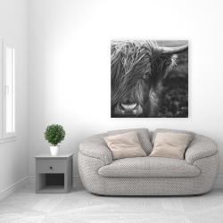 Canvas 36 x 36 - Monochrome portrait highland cow