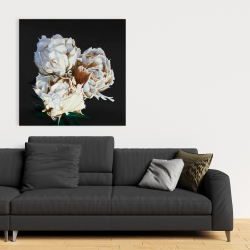 Canvas 36 x 36 - Blooming peonies