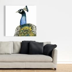 Canvas 36 x 36 - Watercolor peacock