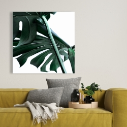Canvas 36 x 36 - Monstera deliciosa