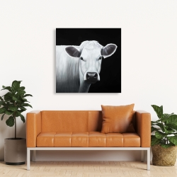 Canvas 36 x 36 - White cow