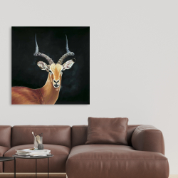 Canvas 36 x 36 - Antelope
