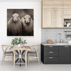 Canvas 36 x 36 - Sheep sepia