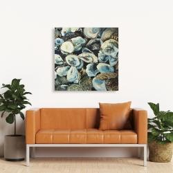Canvas 36 x 36 - Oyster shells