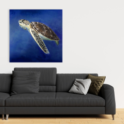Canvas 36 x 36 - Beautiful sea turtle