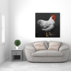 Canvas 36 x 36 - Grey rooster 2