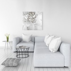 Canvas 36 x 36 - Delicate white chrysanthemum