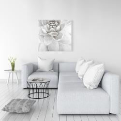 Canvas 36 x 36 - Delicate white chrysanthemum