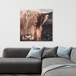 Canvas 36 x 36 - Desaturated highland cow
