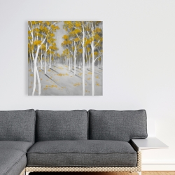Canvas 36 x 36 - Yellow birch forest