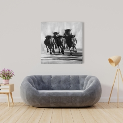 Canvas 36 x 36 - Group of bulls at galops