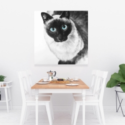 Canvas 36 x 36 - Blue eyes siamese cat