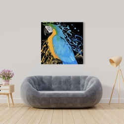 Canvas 36 x 36 - Blue macaw parrot