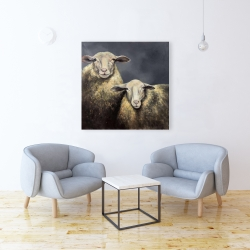 Canvas 36 x 36 - Two sheeps