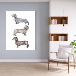 Canvas 36 x 48 - Small dachshund dog