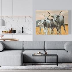 Canvas 36 x 48 - Nguni breeding