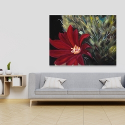 Canvas 36 x 48 - Echinopsis red cactus flower