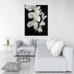 Canvas 36 x 48 - Beautiful orchids