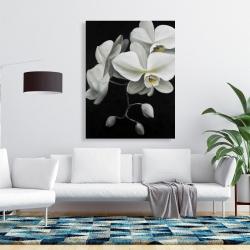 Canvas 36 x 48 - White orchids