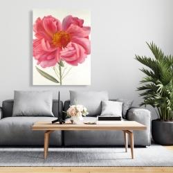 Canvas 36 x 48 - Pink peony flower