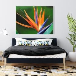 Canvas 36 x 48 - Bird of paradise flower