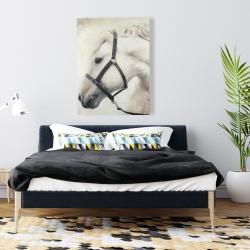 Canvas 36 x 48 - Darius the white horse