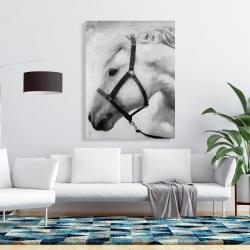 Canvas 36 x 48 - Darius the horse