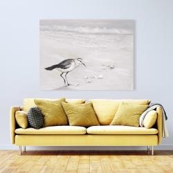 Canvas 36 x 48 - Semipalmated sandpiper