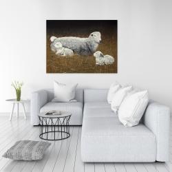 Canvas 36 x 48 - Sheep and lambs