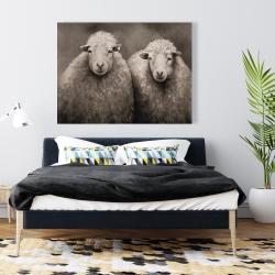 Canvas 36 x 48 - Sheep sepia