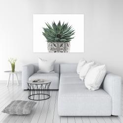 Canvas 36 x 48 - Zebra plant succulent