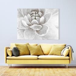 Canvas 36 x 48 - Delicate white chrysanthemum