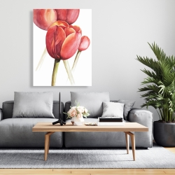 Canvas 36 x 48 - Blossoming tulips closeup