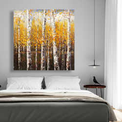 Canvas 48 x 48 - Birches by sunny day