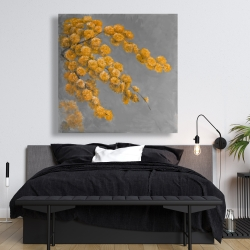 Canvas 48 x 48 - Golden wattle plant