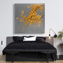 Canvas 48 x 48 - Golden wattle plant with pugg ball flowers