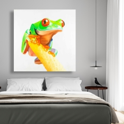 Canvas 48 x 48 - Curious red eyed frog