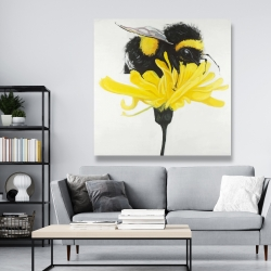 Canvas 48 x 48 - Bumblebee on a dandelion
