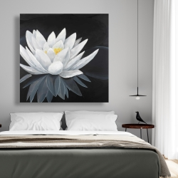 Canvas 48 x 48 - Lotus flower with reflection