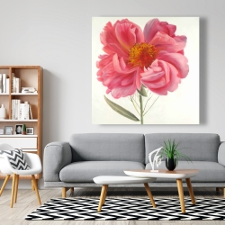 Canvas 48 x 48 - Pink peony flower