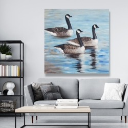 Canvas 48 x 48 - Canada geese in water