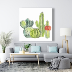 Canvas 48 x 48 - Gathering of small cactus