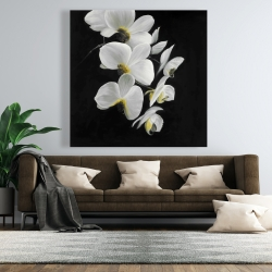 Canvas 48 x 48 - Beautiful orchids