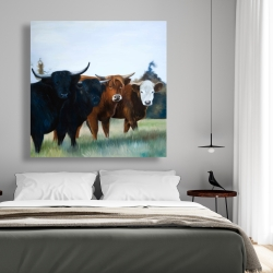 Canvas 48 x 48 - Four highland cows