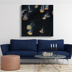Canvas 48 x 48 - Colorful jellyfishes swimming in the dark